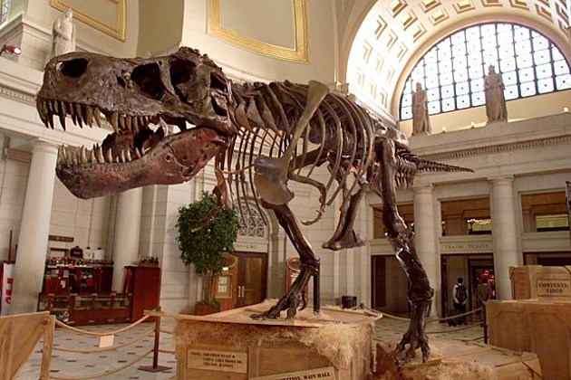 Tyrannosaurus Rex skeleton known as Sue
