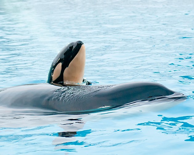 Incidents At Seaworld Parks: SeaWorld Under Attack After Beached Whale Incident