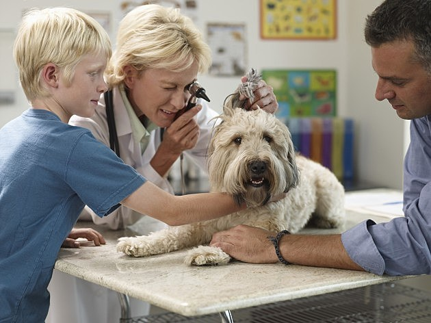Dog at the Veterinarian