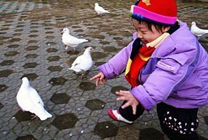 Doves in China