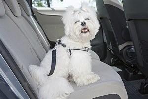 Dog in the car - humonia/ThinkStock