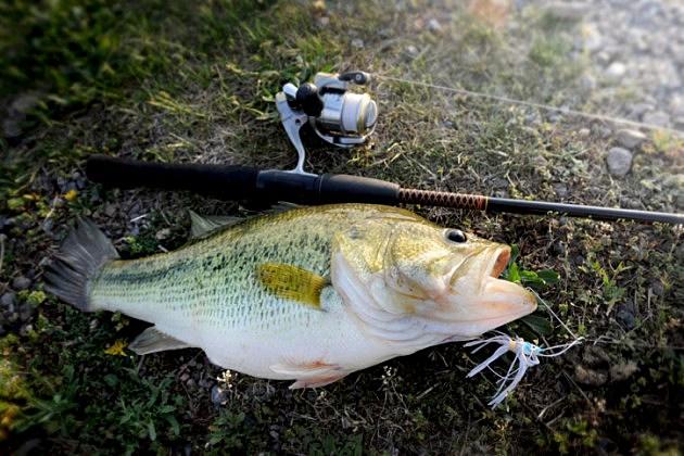 2015 big bass fishing tournament july 11 for Big fish classic